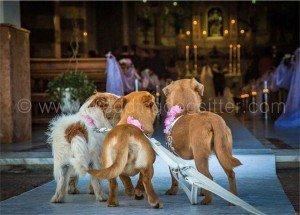 wedding-dog-sitter1