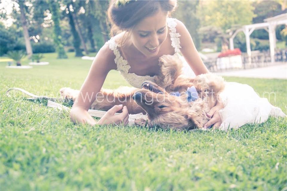 wedding-dog-sitter3