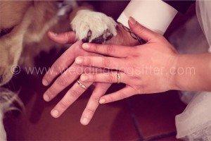 wedding-dog-sitter4